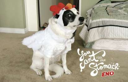 Dressed-Up Dog Ads