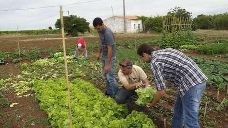Online Farming Enterprises (UPDATE)