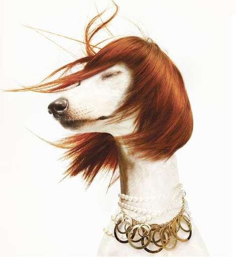Personified Pup Perfume Ads - 'Le Chien' is Unusual and Amusing