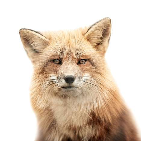 Humanizing Creature Captures - The Morten Koldby 'Animal Portraits #2' Series is Wild