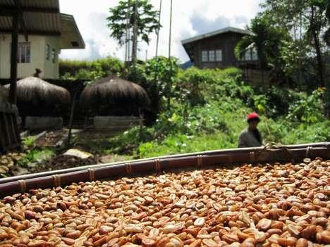 Ethical Organic Java Beans