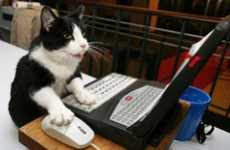 Internet Feline Competitions - The Cat Video Film Festival Features the Best Kittys Around