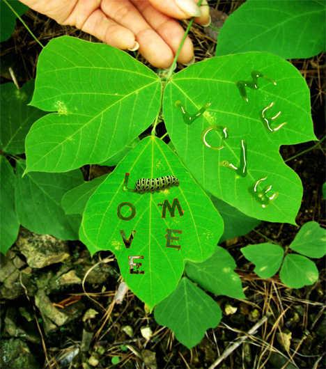 Caterpillar Created Messages