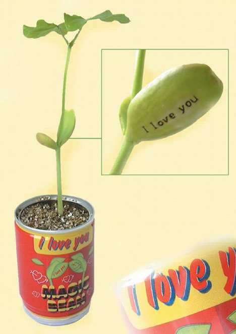 "Real Magic Beanstalks - Plants Grows ""I LOVE YOU"" on Leaf"
