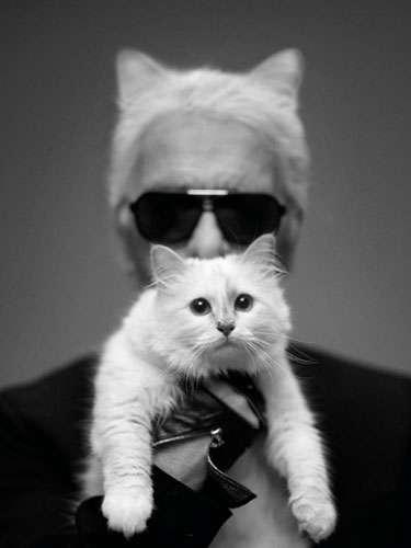 Fashion Icon Feline Spreads