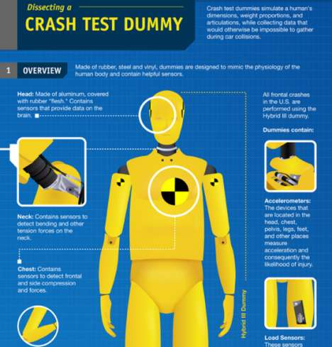 Crash Test Dummy Infographics