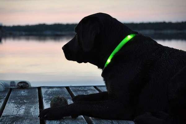 22 Dashing Dog Collars