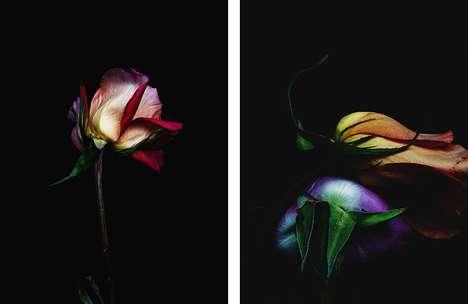 Perishing Blossom Portraits
