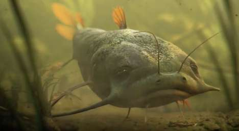 Fish Irony Commercials