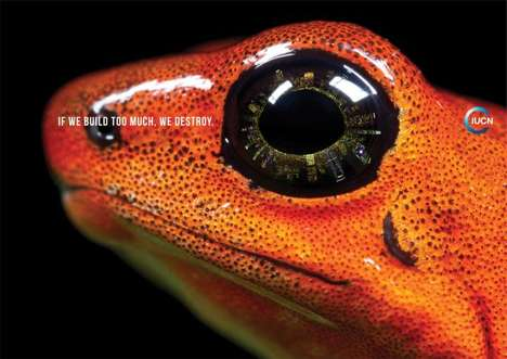 From Funky Amphibian Footwear to Ecological Insight Advertising