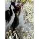 Foliage Fashion Polaroids Image 4