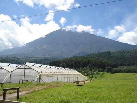 Altruistic Organic Fertilizer Technology