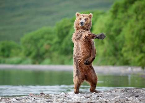 Adorable Bear Captures