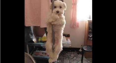 Pet Competition Videos