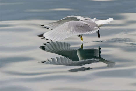 Mirrored Fowl Captures