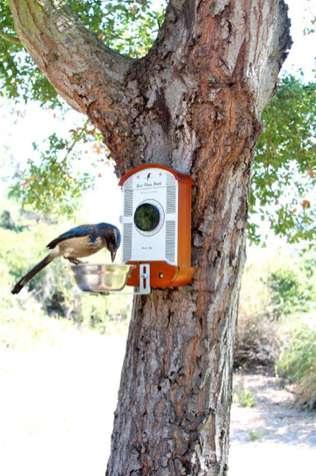 Avian-Housing Cameras