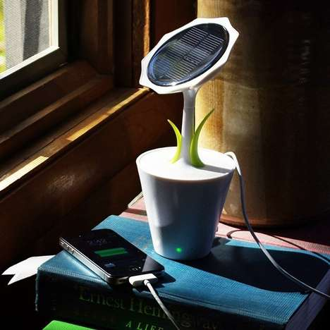 Sun-Powered Floral Chargers