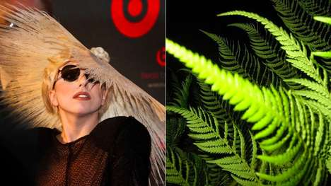 Pop Star Plants - Researchers Name 'Gaga Germanotta' Genus of Ferns After Iconic Recording Artist