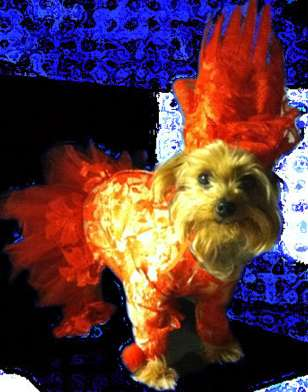 Singing Sensation Pooch Costumes - The Lady Gaga Red Lace Outfit is Perfect for a Diva Dog