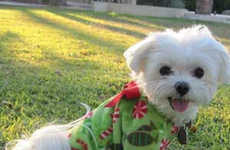 Holiday Pooch Sleepwear - Christmas Dog Pajamas are a Cute Way to Bring Holiday Cheer to Your Pet