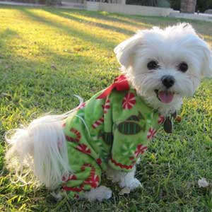 Holiday Pooch Sleepwear