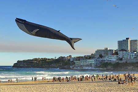 Anatomically Correct Sea Creature Kites