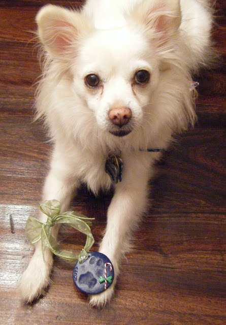 DIY Doggy Holiday Accessories