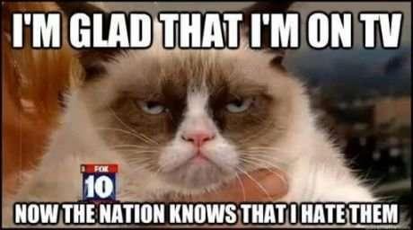 Frowning Kitten Videos