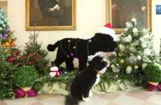 Merry Presidential Pooch Videos - Bo the White House Dog Checks Out Presidential Holiday Decorations