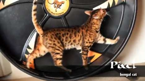 Feline Exercise Equipment - The Cat Wheel Allows Your Furry Friend to Have a Treadmill-Like Workout