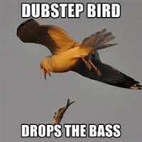 Dubstep Singing Birds