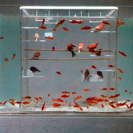 Fish Bird Tanks