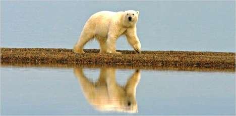 Protecting Polar Bears