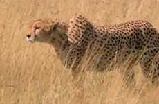 Unrealistic Animal Race Ads - This Skechers Super Bowl Commercial Pits Man Against Cheetah