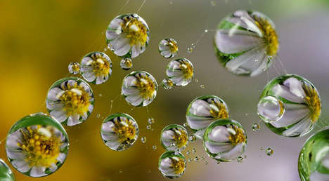 Magnified Plant Droplet Photography