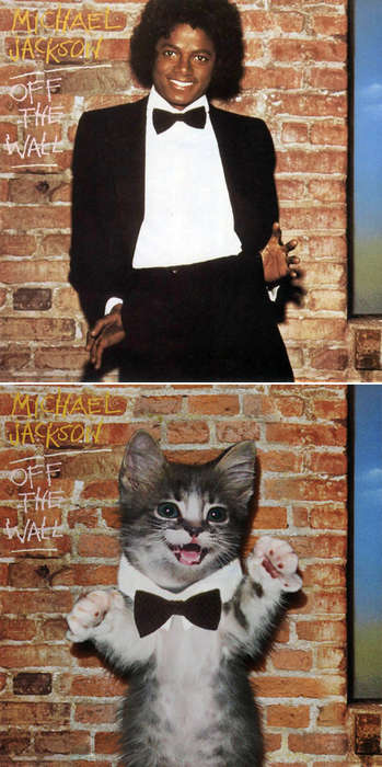The Kitten Covers Feature Photo-Shopped Kittens as Rock Stars