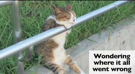 Depressed Single Feline Videos