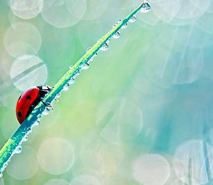 Minute Ladybug Portraits