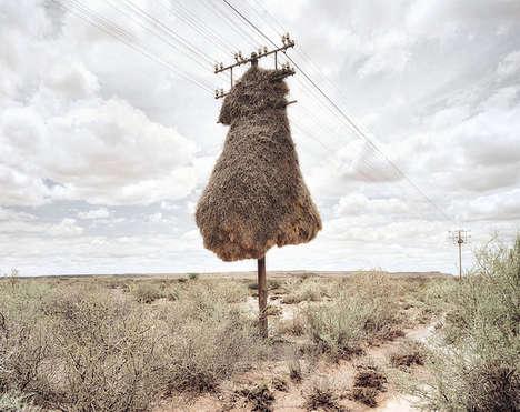 Massive Nest Photography