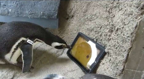 A Specially Designed Penguin Ipad May Be on the Way After This Happened