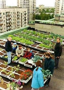 Terrace Farming - Urban Gardens Boom in NYC
