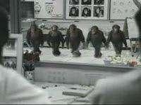 Riverdancing Chimpanzees