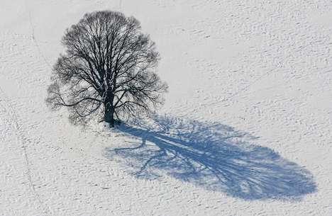 Barren Tree Photography