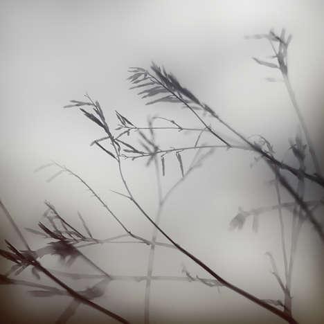 Moody Foliage Photography