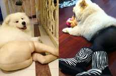Pantyhose Pooch Portraits - Stockings on Pets Make for Some Seriously Funny Dog Pictures