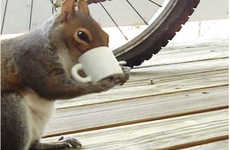Squirrel-Sized Java Mugs (UPDATE) - Here's Evidence that this Tiny Coffee Mug is Squirrel Compatible