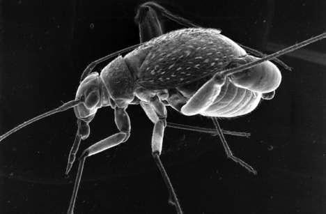 Microscopic Bacteria Space Suits