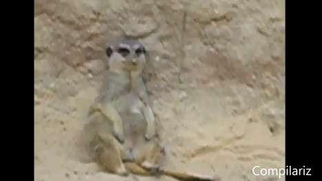Sleepy Animal Viral Videos