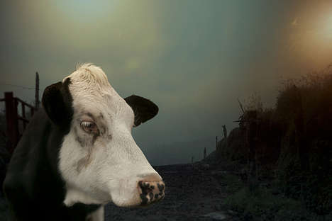 Desolate Animal Captures