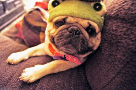 Eccentrically Styled Canines - The Pugs in Clothes Tumblr is Dedicated to Fashionable Pups